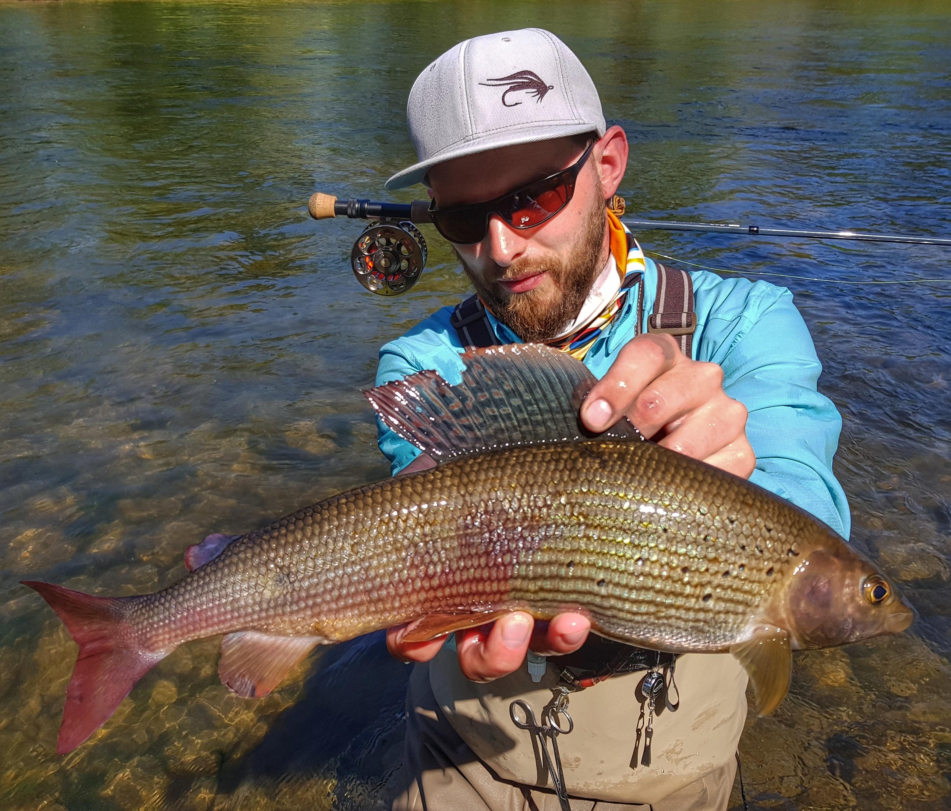 Beauty Grayling from Pieniny National Park - catch&release zone