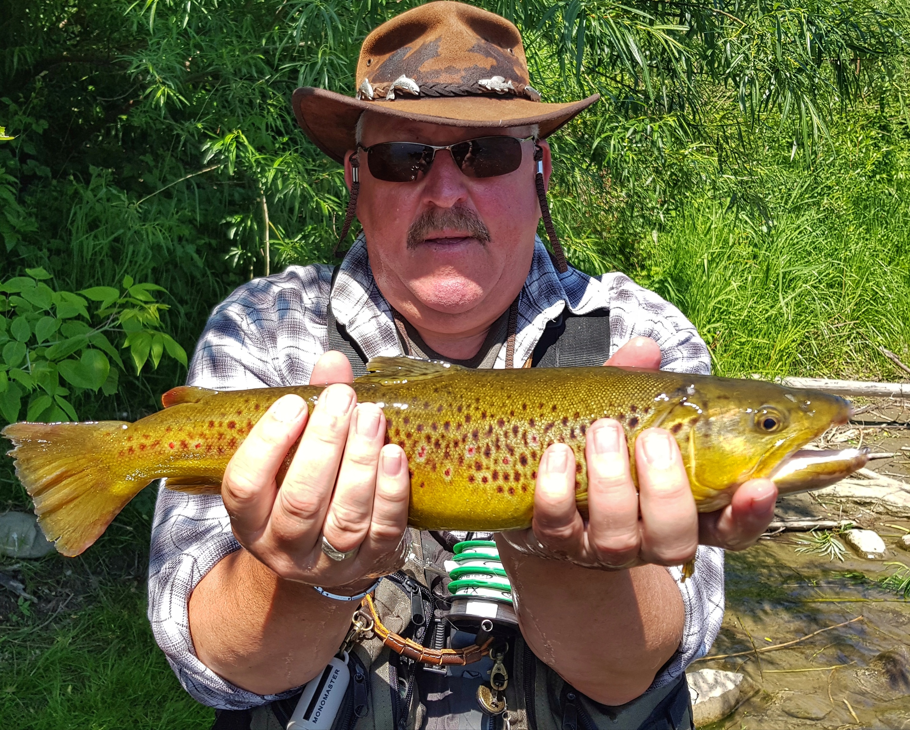 Nice coloured Brown Trout from southern Poland Dunajec River