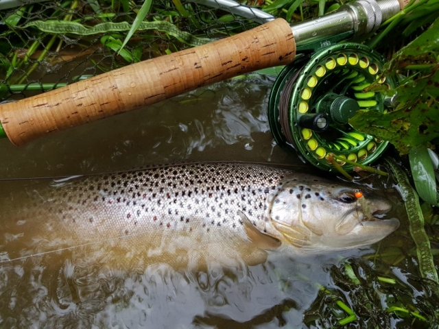 Streamer fishing for trout, olive leech with orange head.