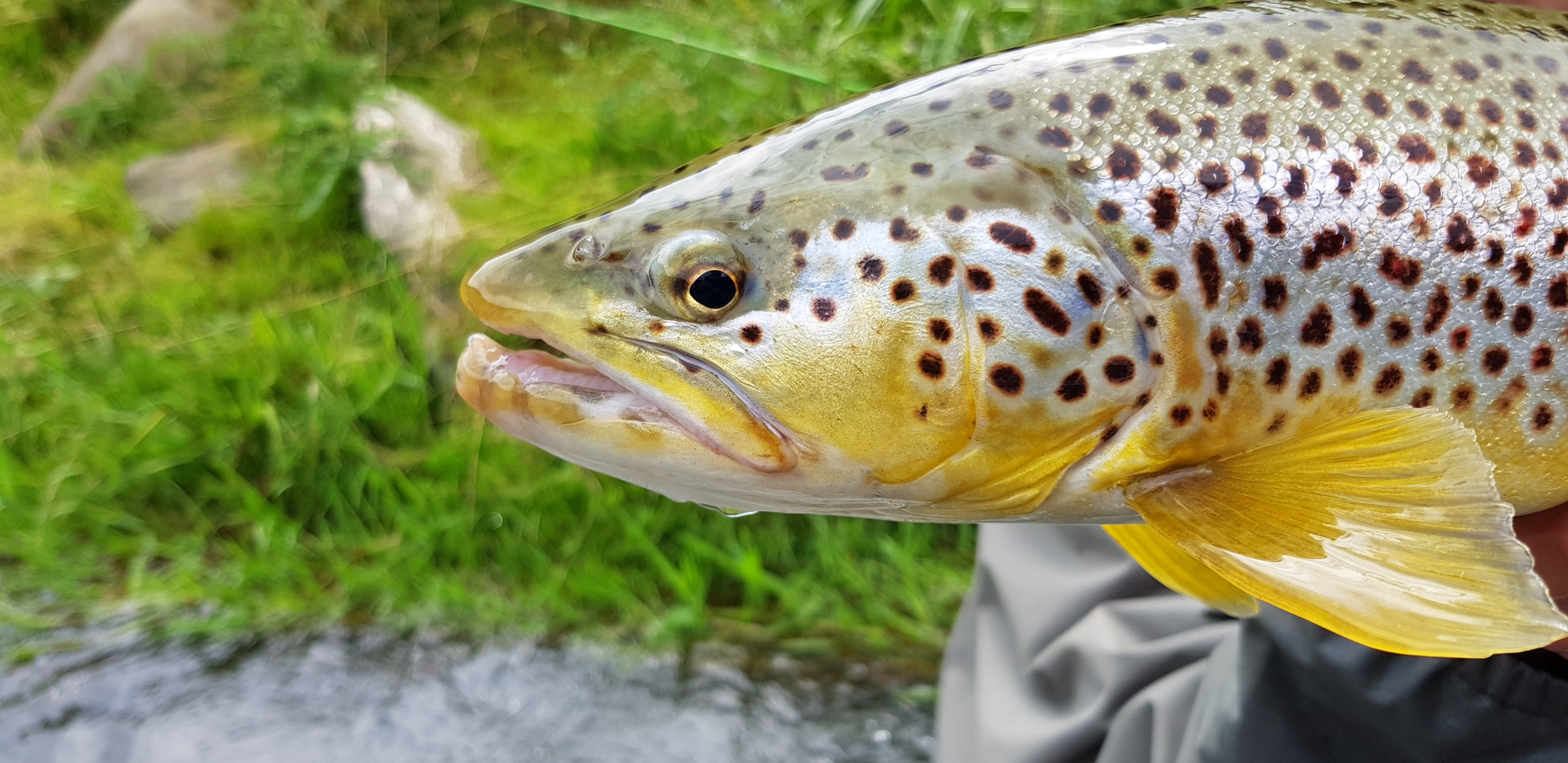 Another beauty from River bottom, nymph fishing cought that one