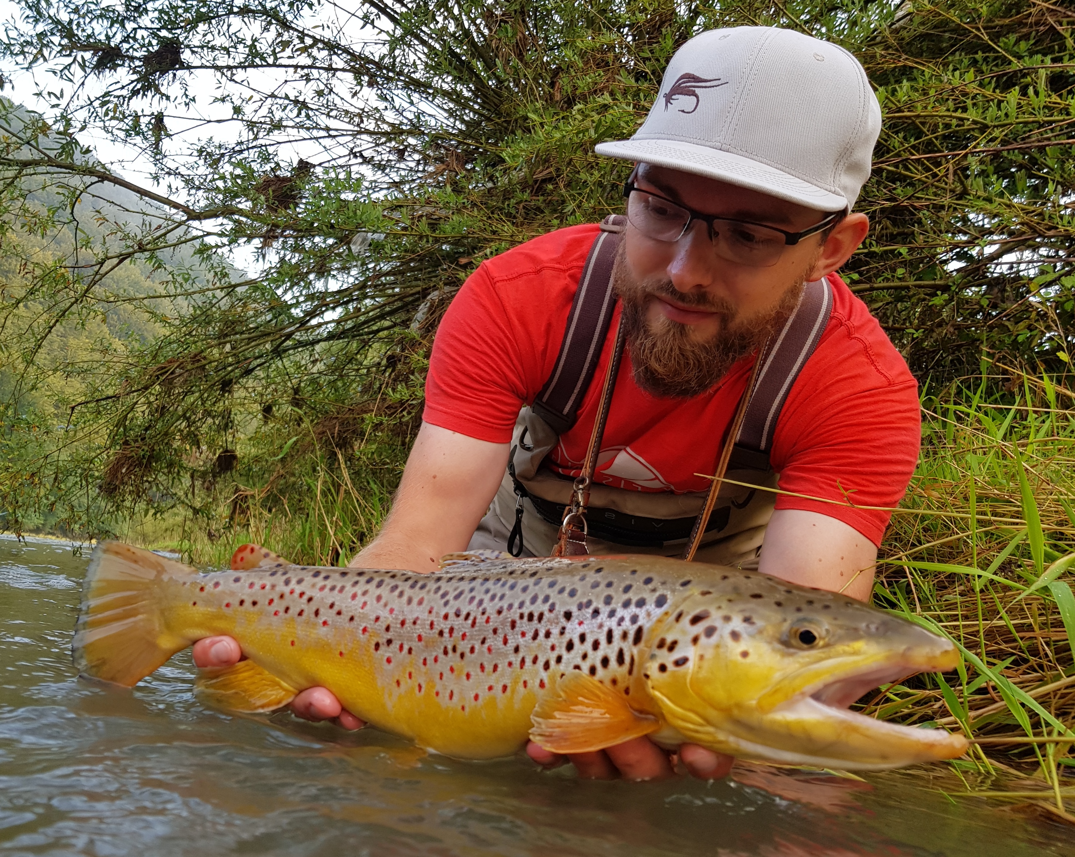Coloured Brown Trout streamer fishing in Dunajec River Fly Fishing in Poland