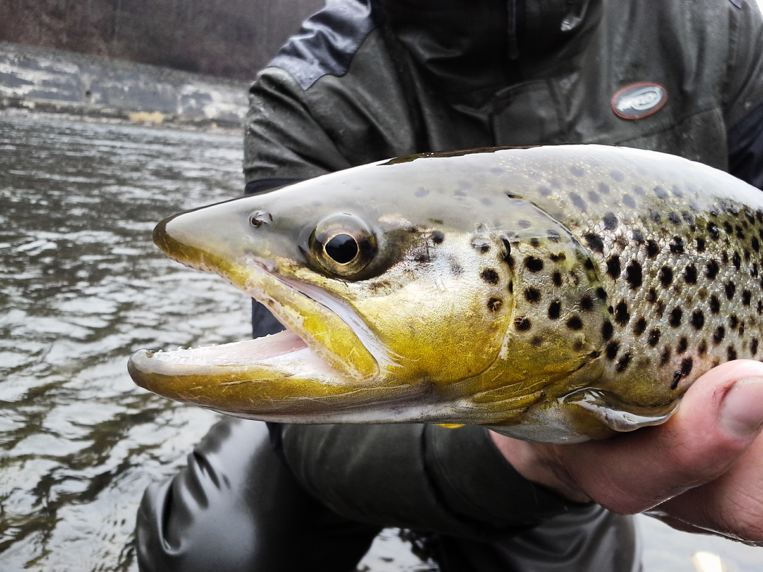 Second wall - Dunajec River,  Airflo, Brown Trout