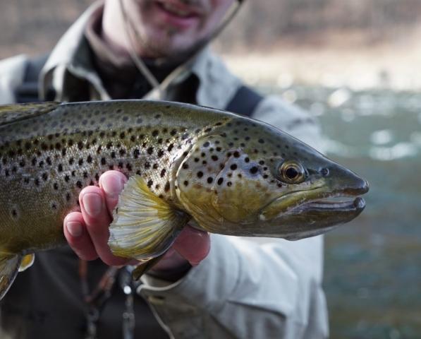 Touroperator Fly fishing Poland Brown Trout