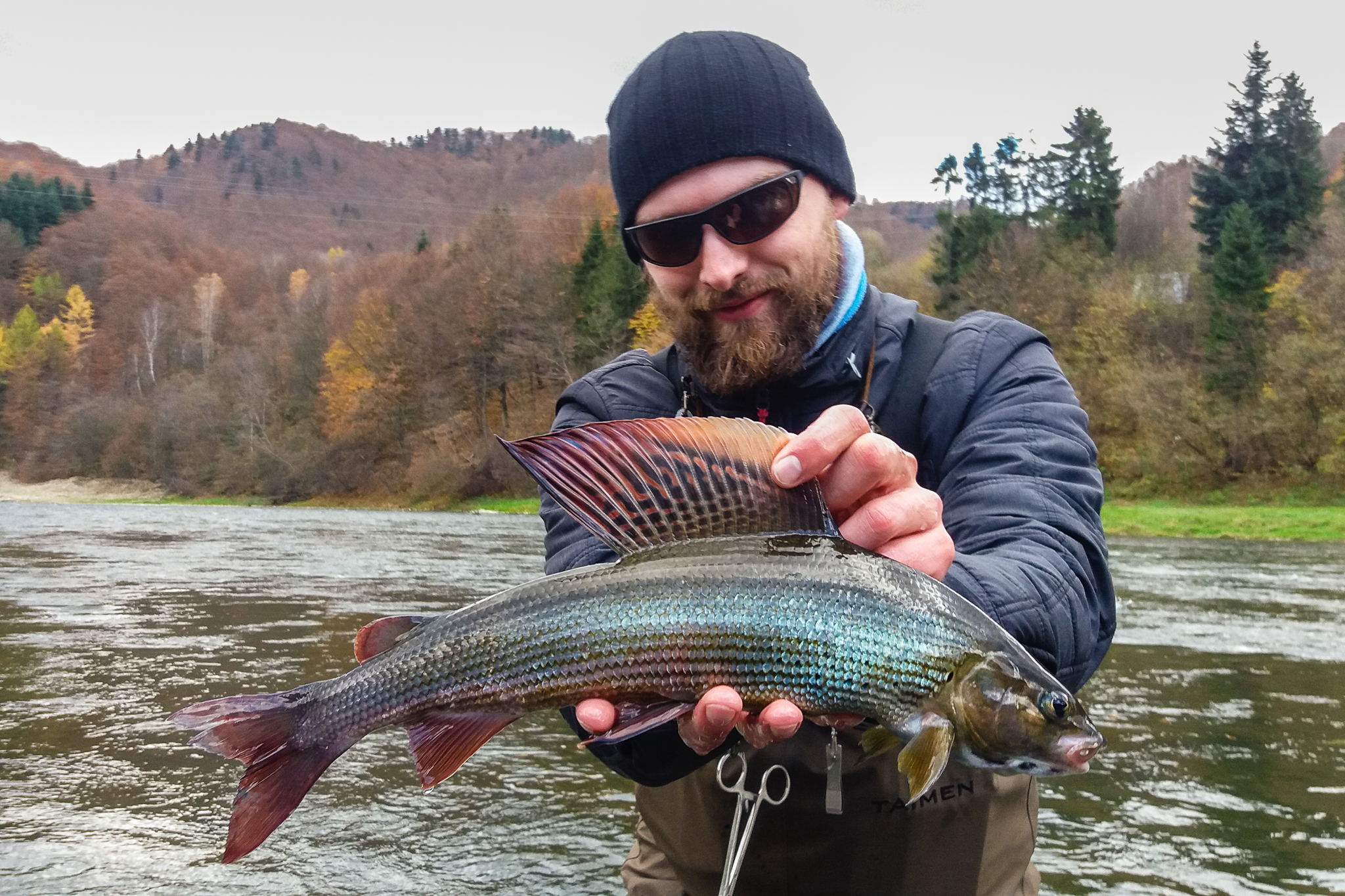 Big Grayling on dry fly - Poland fly fishing