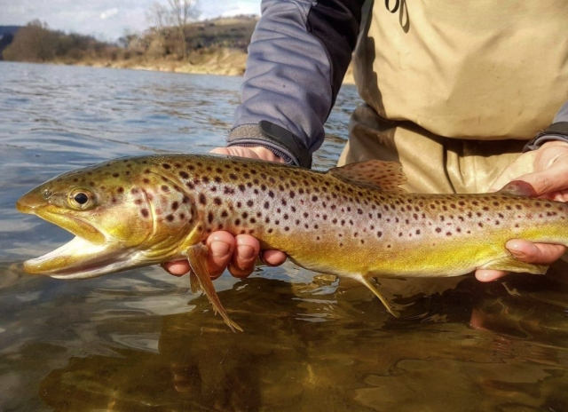 Streamer fishing for trout - spring fishing.