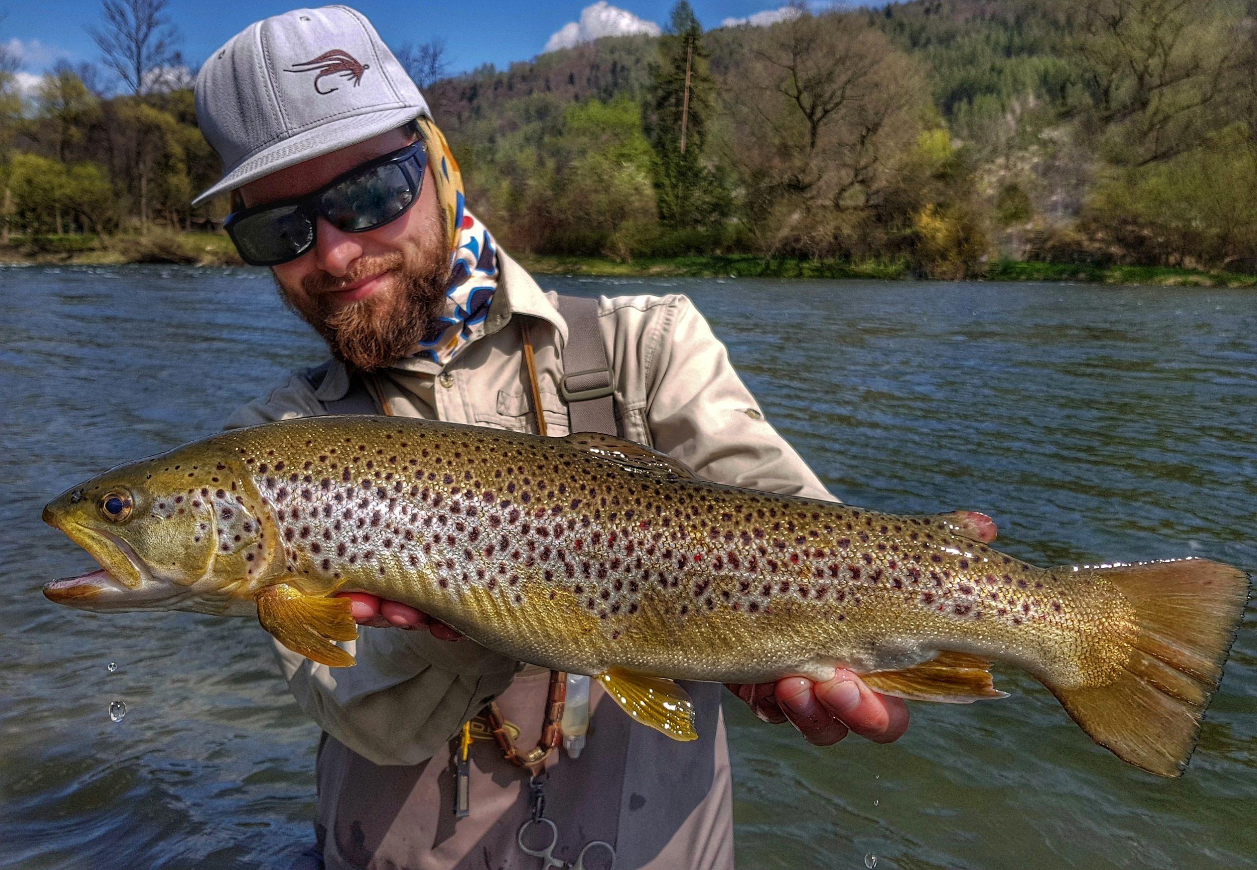 Dunajec River Brown Trouts, similar to Bosnia Una and Ribnik fishing