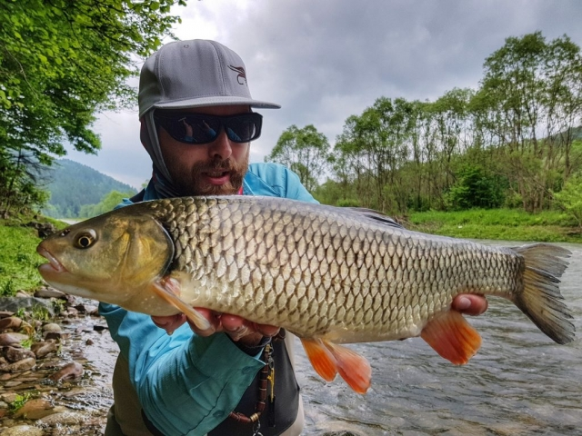 Streamer fishing for chub