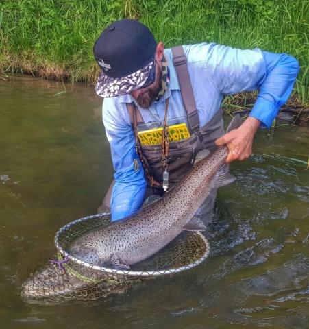 Streamer fishing - Danube Salmon - Mongolian Taimen in Europe Peche à la mouche en Pologne