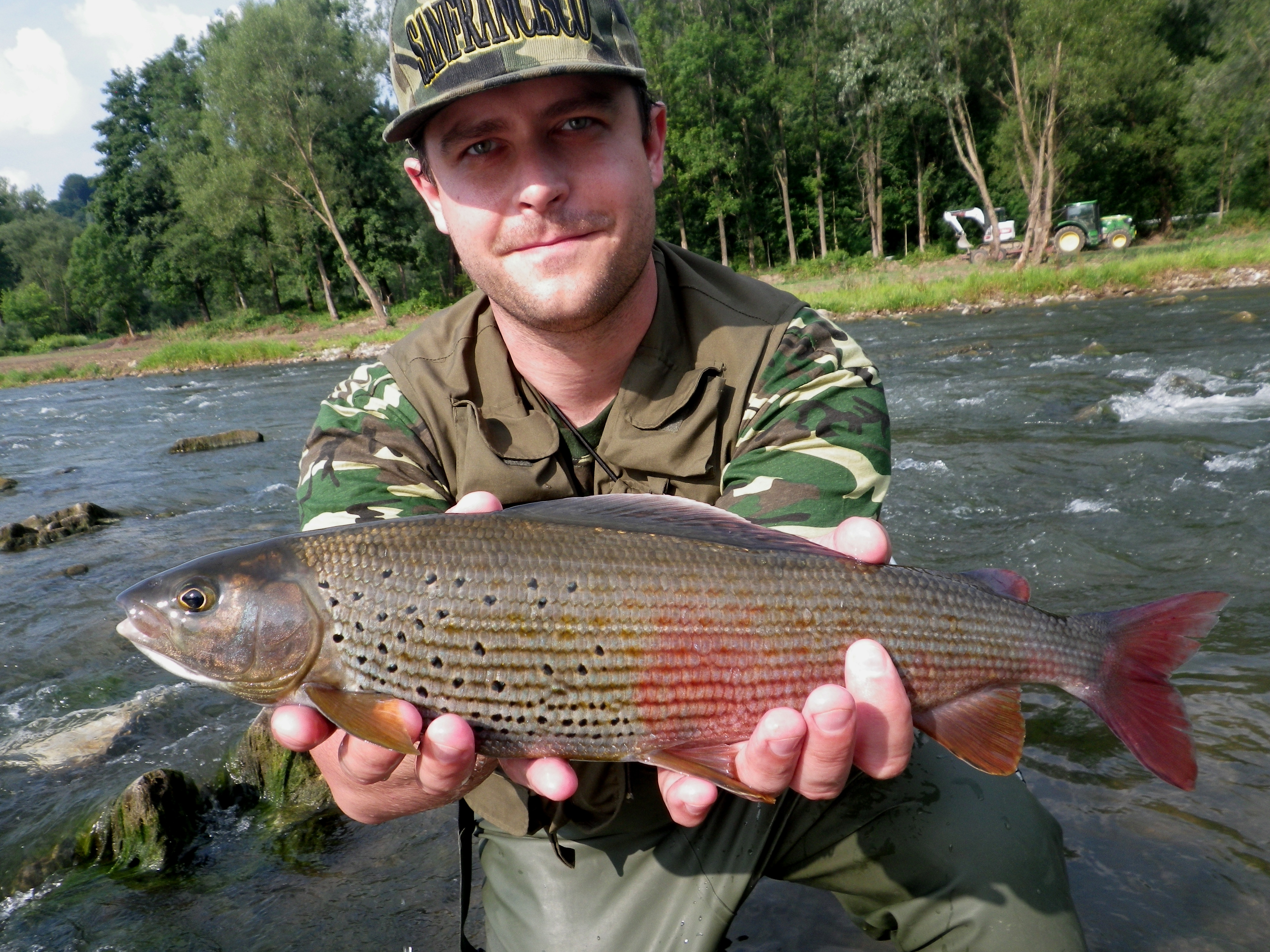 Lady of the stream - river Dunajec Grayling