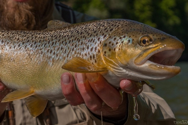 The best fishing in Poland - catch & release