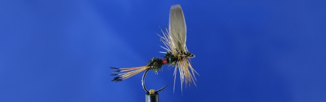 Royal Coachman dry fly, tippet, peacock hearl, red silk, mallard duck wing