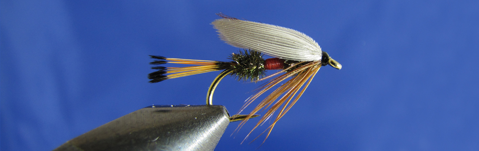 Royal Coachman Wet tippet, peacock hearl, red thread, brown hen hackle, white wing.