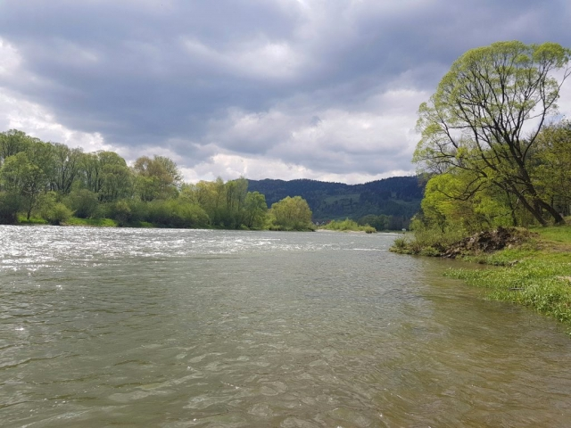 Perfect conditions for trout fly fishing