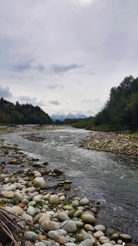 Wild mountain river with wild trouts and graylings