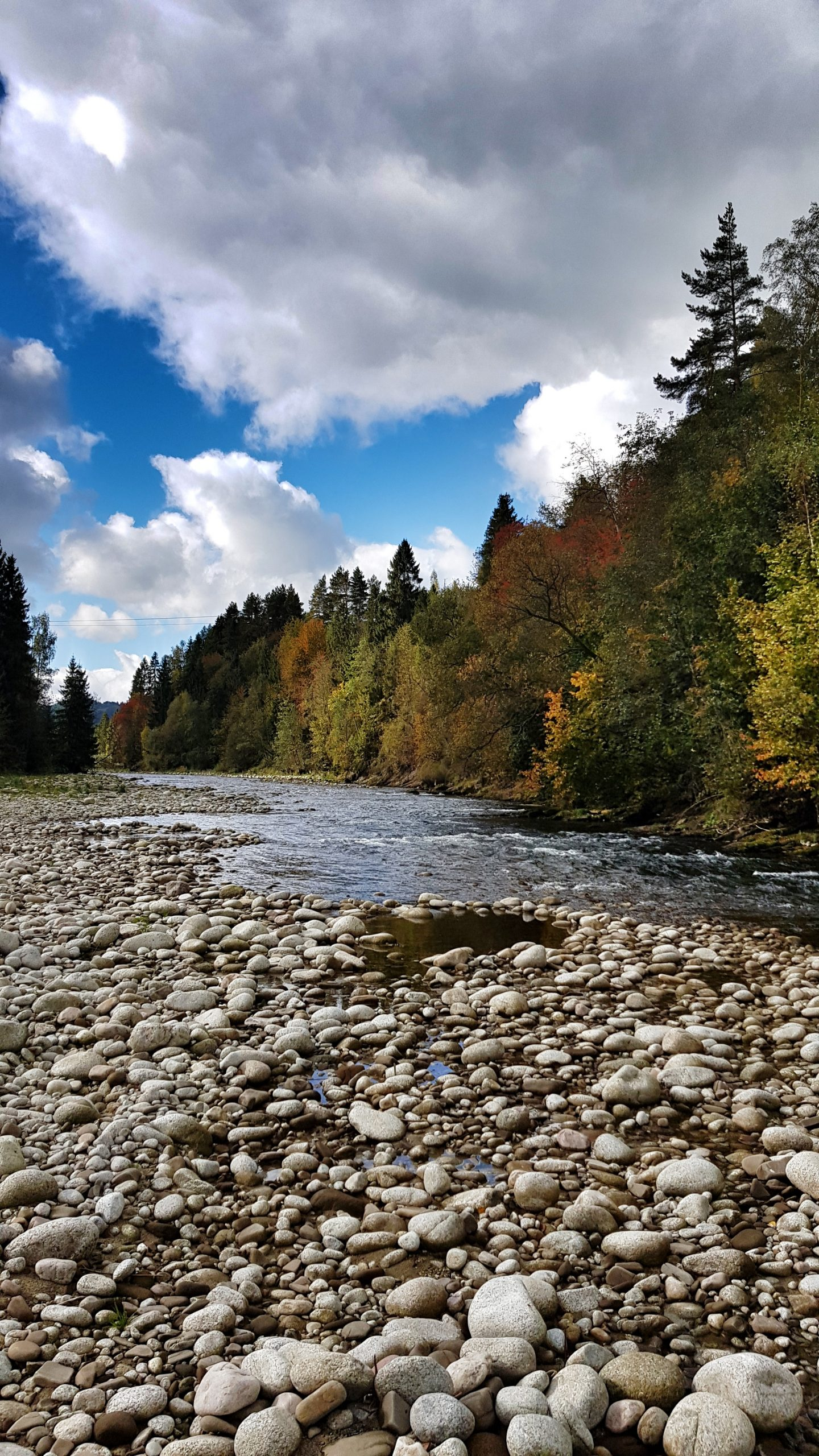 Autumn for grayling dry fly fishing, Europe fly fishing