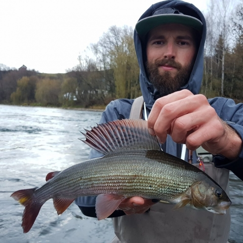 Beautifull fish full of colours fly fishing in poland