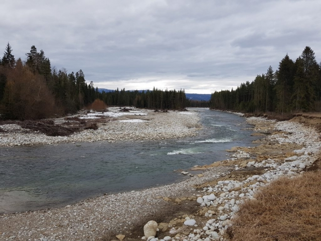 Rapids between forest wild trout and grayling area.
